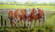 Curious Cattle watercolour, 30 x 42cm