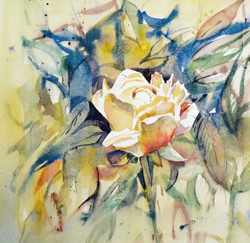 Rose watercolour, 23 x 23cm