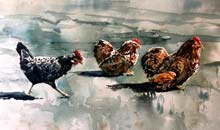 Bantams, 36x50 Saunders Waterford, rough