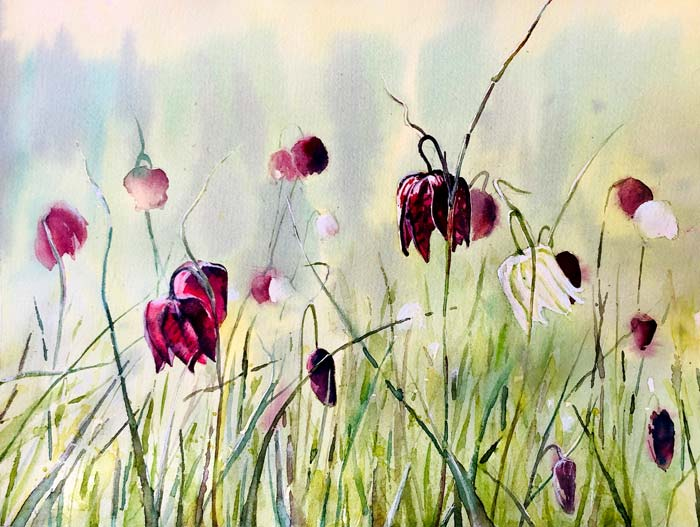 Fritillaries, 25x30 HP